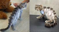 Thẩm mỹ viện chó mèo gây sốt với kiểu tỉa lông 'khó đỡ'