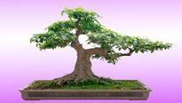 Những cây giúp loại bỏ bức xạ, sóng điện thoại, hóa chất độc hại trong nhà