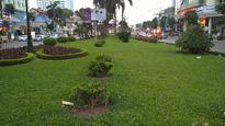 'Cuộc cách mạng' về cây xanh ở Hà Nội