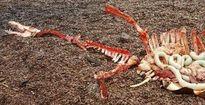 Bất ngờ phát hiện quái vật hồ Loch Ness đã chết?