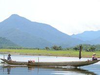 Dự án nuôi bò Úc tại Phú Yên: Hiện thực hóa giấc mơ thoát nghèo