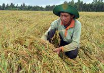 Nông nghiệp lần đầu tiên tăng trưởng âm: Nông dân đang 'kiệt sức'