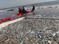 Liên hơp quốc cảnh báo về tình trạng đánh bắt cá bừa bãi