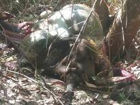 3 cha con rơi vào vòng lao lý vì bắn chết... bò tót