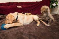 Những đôi bạn 'lạ đời' trong thế giới động vật