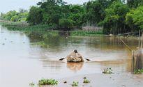 Cá tôm không còn, 'làng ung thư' ven sông Long Hầu cũng bắt đầu xuất hiện