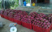 Australia thị sát sản phẩm thanh long xuất khẩu của Việt Nam