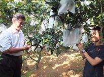 Nông dân phía Bắc bắt đầu mê túi bao trái cây