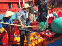 Ngư dân Quảng Ngãi quyết tâm bám biển