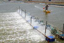 Dự án phục vụ nuôi trồng thủy sản tại huyện Duyên Hải – tỉnh Trà Vinh: Đã đến lúc cần phải thanh tra