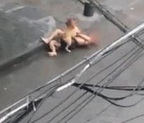 Chó pitbull điên loạn tấn công chủ nhân trên phố