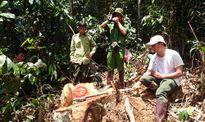Vụ phá rừng ở Bảo Lâm: Khởi tố, bắt tạm giam 11 bị can
