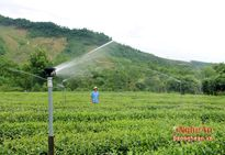 Nghệ An: Triển khai 25 mô hình khuyến nông mới