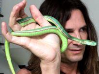 Tiêm nọc độc rắn suốt 30 năm để trẻ khỏe lâu hơn