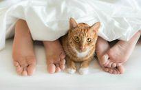 Đau bụng dữ dội vì ngủ chung với mèo