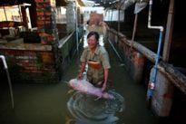 Lũ lụt tại Trung Quốc: Người dân khóc ròng bên xác lợn