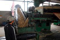 """Xuất khẩu dăm gỗ thiệt hại do phát triển """"nóng"""""""