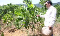 Người nông dân làm giàu trên vùng đất đồi gò