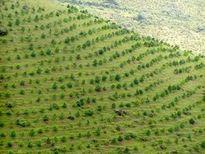 Quyết tâm khôi phục và phát triển rừng bền vững