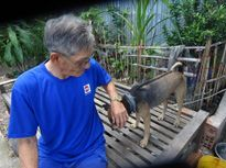 Huyền thoại về loài 'khuyển vương' Phú Quốc