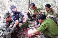 Giữ rừng Tây Nguyên - Cần tiếng nói chung