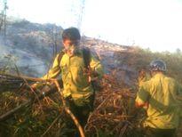 Nỗ lực phòng chống cháy rừng
