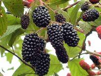 Top 5 loại trái cây tốt cho sức khỏe nhất trên thế giới
