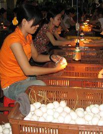 Trứng vịt vào mùa Trung thu, giá vẫn thấp