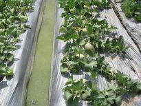 9 bí quyết sản xuất rau màu trong mùa mưa