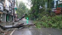 Cây xanh gãy đổ hàng loạt, gió mạnh khiến các phương tiện khó di chuyển tại Hà Nội
