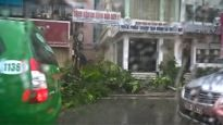 Gió giật khủng khiếp, quật đổ cây ngổn ngang trên đường Hà Nội