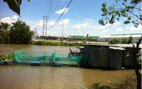 Giám sát chặt vận hành nhà máy giấy Lee&Man để tránh họa môi trường