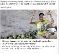 Dưa hấu Trung Quốc nảy như bóng cao su khi nện xuống đất