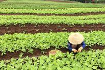 Nhà giàu Việt vung tiền ăn ngon sang chảnh