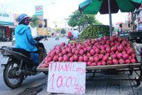 Thanh long đổ đống lề đường Sài Gòn giá 200 đồng/kg tại vườn
