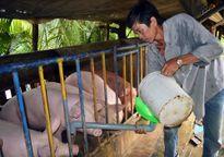 'Phao' cứu sinh cho hộ dân vùng khó