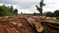 Bình Phước khẳng định dự án chăn nuôi kết hợp trồng rừng là đúng quy định