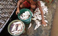 Thanh Hóa: Thiệt hại do mưa lũ ước tính 125 tỷ đồng