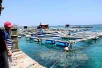 Tạo động lực lan tỏa từ phát triển vùng ven biển