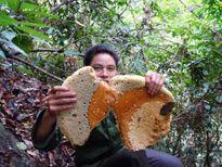 Mật ong rừng: Mua bao nhiêu cũng có, giá bao nhiêu cũng bán
