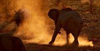 24h qua ảnh: Voi và tê giác đen quyết chiến giành nước uống