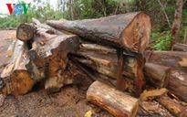 Bình Phước tạm dừng 6 dự án 'xóa rừng tự nhiên'