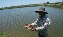 Huế: Người nuôi trồng thủy sản thất bát vì sản phẩm bị 'rút ruột'?