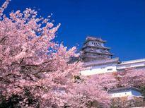 """Những """"điểm cộng"""" ở giáo dục Nhật Bản khiến nước khác phải """"ghen tị"""""""