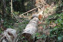 Phó Thủ tướng yêu cầu sớm xét xử vụ phá rừng ở Thủy điện Đồng Nai 5