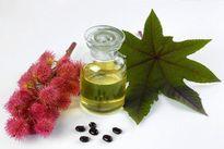 6 lợi ích của dầu thầu dầu đối với sắc đẹp và sức khỏe