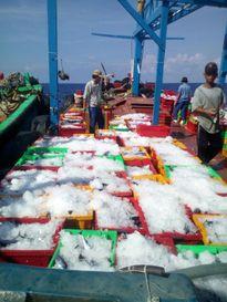 Cần đánh giá thiệt hại cho doanh nghiệp thủy sản