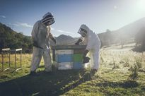 Australia và New Zealand tranh chấp về mật ong Manuka