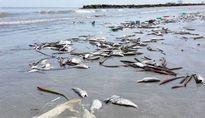 Công bố hiện trạng môi trường biển miền Trung: Vẫn còn nhiều băn khoăn