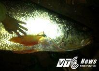 Chuyện ly kỳ về những con cá tiền tỷ ở cửa biển Thái Bình